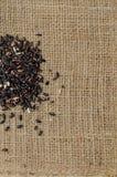 Το μαύρο ρύζι στην τσάντα σάκων για το κείμενο υποβάθρου Στοκ Φωτογραφίες