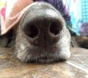 Το μαύρο σκυλί που κρύβεται στο λουτρό επειδή φοβάται τις καταιγίδες Στοκ Εικόνες