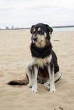 Το μαύρο σκυλί κάθεται στην παραλία Στοκ εικόνες με δικαίωμα ελεύθερης χρήσης