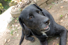 Το μαύρο σκυλί Στοκ εικόνες με δικαίωμα ελεύθερης χρήσης