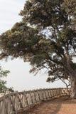 Το μεγάλο δέντρο εκτός από έναν άσπρο φράκτη αγνοεί, μουντός ουρανός στοκ εικόνα με δικαίωμα ελεύθερης χρήσης