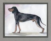 Το μεγάλο μπλε λαγωνικό Gascon χρωμάτισε στο watercolor στο σχεδιάγραμμα στοκ εικόνα με δικαίωμα ελεύθερης χρήσης