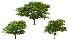 Το μεγάλο πράσινο δέντρο συλλογής είναι φωτεινό στο λευκό Στοκ εικόνα με δικαίωμα ελεύθερης χρήσης