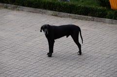 Το μεγάλο σκυλί Στοκ Εικόνα