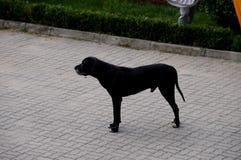 Το μεγάλο σκυλί Στοκ φωτογραφίες με δικαίωμα ελεύθερης χρήσης