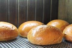 Το μεγάλο ψωμί με τις σταφίδες Στοκ Εικόνα