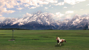 Το μεγάλο Tetons με το καλπάζοντας άλογο Στοκ Εικόνα