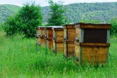Το μελισσουργείο βρίσκεται στην οικολογικά καθαρή ορεινή περιοχή Να λάβει οικολογικά το καθαρό μέλι Μέλι βουνών Στοκ Εικόνα