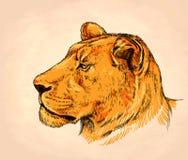 Το μελάνι ζωγραφικής βουρτσών σύρει την απεικόνιση λιονταριών Στοκ εικόνες με δικαίωμα ελεύθερης χρήσης