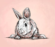 Το μελάνι ζωγραφικής βουρτσών σύρει την απεικόνιση κουνελιών Στοκ εικόνα με δικαίωμα ελεύθερης χρήσης