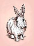 Το μελάνι ζωγραφικής βουρτσών σύρει την απεικόνιση κουνελιών Στοκ φωτογραφία με δικαίωμα ελεύθερης χρήσης