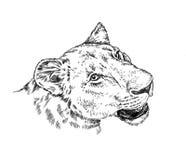 Το μελάνι ζωγραφικής βουρτσών σύρει την απομονωμένη απεικόνιση λιονταριών Στοκ φωτογραφία με δικαίωμα ελεύθερης χρήσης
