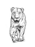 Το μελάνι ζωγραφικής βουρτσών σύρει την απομονωμένη απεικόνιση λιονταριών Στοκ Εικόνα