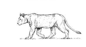 Το μελάνι ζωγραφικής βουρτσών σύρει την απομονωμένη απεικόνιση λιονταριών Στοκ Φωτογραφίες