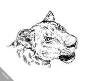 Το μελάνι ζωγραφικής βουρτσών σύρει την απομονωμένη απεικόνιση λιονταριών Στοκ Φωτογραφία