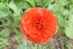 Τολμηρό και βέβαιο πορτοκαλί λουλούδι Στοκ εικόνα με δικαίωμα ελεύθερης χρήσης