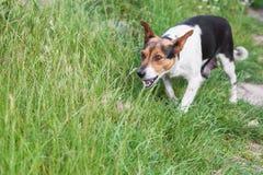 Το μιγία σκυλί προστατεύει τα κουτάβια του στοκ φωτογραφίες