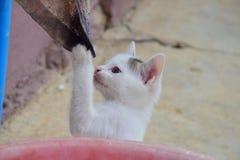 Το μικροσκοπικό γατάκι παίζει με το παλαιό κουρέλι Στοκ Φωτογραφίες