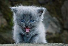 Το μικρό γατάκι Στοκ εικόνες με δικαίωμα ελεύθερης χρήσης