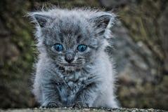 Το μικρό γατάκι Στοκ εικόνα με δικαίωμα ελεύθερης χρήσης