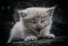 Το μικρό γατάκι Στοκ Φωτογραφία