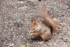 Το μικρό ζώο - πρωτεΐνη Στοκ Φωτογραφίες