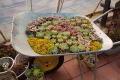 Το μικρό κάρρο succulents Στοκ φωτογραφία με δικαίωμα ελεύθερης χρήσης
