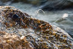 Το μικρό καβούρι παίρνει ένα ντους Στοκ εικόνα με δικαίωμα ελεύθερης χρήσης