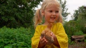 Το μικρό κορίτσι κρατά στα χέρια του λίγο κοτόπουλο απόθεμα βίντεο