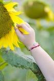 Το μικρό κορίτσι μαζεύει με το χέρι ένα πέταλο από τον ηλίανθο Στοκ Φωτογραφία