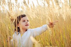 Το μικρό κορίτσι μαδά μια spikelets χλόη στον τομέα Στοκ Εικόνα