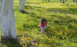 Το μικρό κορίτσι παίρνει την πικραλίδα στο χορτοτάπητα στοκ εικόνα με δικαίωμα ελεύθερης χρήσης
