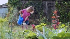 Το μικρό κορίτσι ποτίζει το λάχανο από το πότισμα μπορεί στον κήπο κουζινών απόθεμα βίντεο