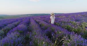 Το μικρό κορίτσι σε ένα καπέλο αχύρου περπατά τον τομέα lavender σε σε αργή κίνηση απόθεμα βίντεο