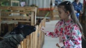 Το μικρό κορίτσι ταΐζει τα λαχανικά αιγών και προβάτων σε έναν ζωολογικό κήπο ή ένα αγρόκτημα επαφών φιλμ μικρού μήκους