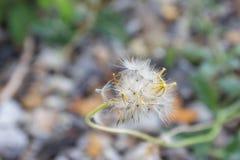 Το μικρό λουλούδι στο φως της ημέρας στοκ εικόνες