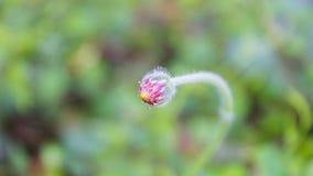 Το μικρό λουλούδι στο φως της ημέρας Στοκ φωτογραφίες με δικαίωμα ελεύθερης χρήσης