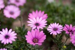 Το μικρό λουλούδι Στοκ Φωτογραφία