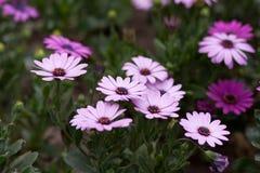 Το μικρό λουλούδι Στοκ Εικόνες