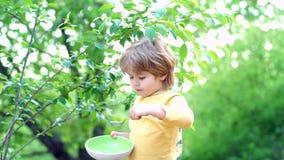 Το μικρό παιδί που έχει το πρόγευμα Το ευτυχές κουτάλι αγοράκι τρώεται υπαίθριος Μωρό που τρώει τα τρόφιμα στη φύση πράσινη απόθεμα βίντεο