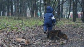Το μικρό παιδί στο θερμό jumpsuit περπατά στο δάσος και δοκιμάζει τη σύλληψη ο κόκκινος σκίουρος απόθεμα βίντεο