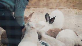 Το μικρό παιδί ταΐζει τα κουνέλια με τη χλόη, κινηματογράφηση σε πρώτο πλάνο φιλμ μικρού μήκους