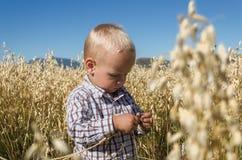 Το μικρό παιδί στον τομέα σίτου παίζει Στοκ Φωτογραφία