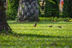 Το μικρό πουλί Στοκ Φωτογραφία
