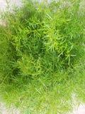 Το μικρό πράσινο δέντρο κήπων τύπων του Κορκ φύσης στοκ εικόνες