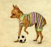 Το μικρό σκυλί στις γυναικείες κάλτσες σωμάτων στοκ φωτογραφία με δικαίωμα ελεύθερης χρήσης