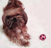 Το μικρό σκυλί μου Στοκ Εικόνες