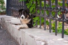 Το μικρό σκυλί που κοιτάζει μέσω του φράκτη Στοκ φωτογραφίες με δικαίωμα ελεύθερης χρήσης