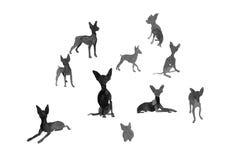 Το μικρό σκυλί σε διαφορετικό θέτει Στοκ Εικόνες