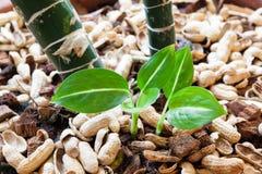 Το μικρό φυτό αυξάνεται στο οργανικό χώμα Στοκ Φωτογραφία